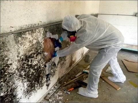 Mold Removal Charleston