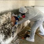 Mold Removal Charleston SC